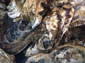 赤崎の牡蠣