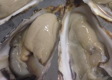 北海道 仙鳳趾の牡蠣!