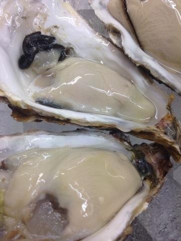 三陸の牡蠣です