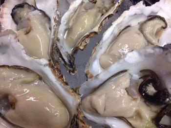 相生の牡蠣