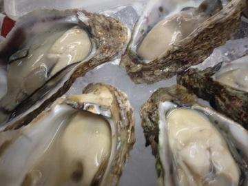福井の岩牡蠣