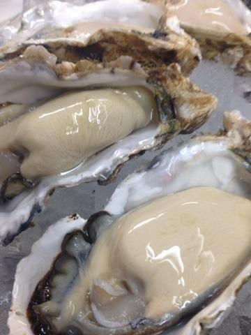北海道 昆布森 仙鳳趾(せんぽうし)牡蠣