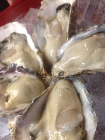 牡蠣!兵庫県相生産
