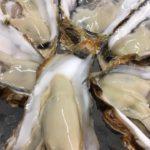 兵庫県赤穂の牡蠣