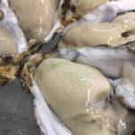 大船渡 赤崎産の牡蠣