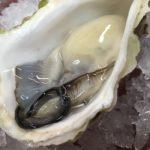 岩牡蠣 良いです!