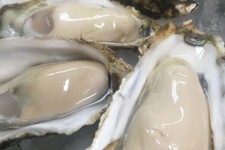 昆布森の牡蠣