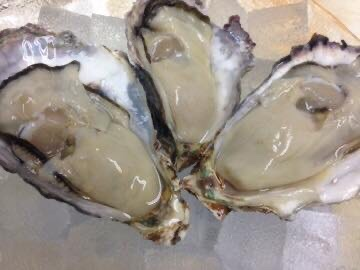 兵庫県相生産の牡蠣