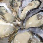 岩手県赤崎産の牡蠣