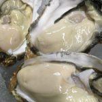 赤崎産牡蠣