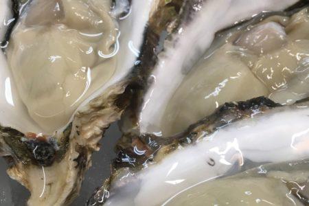 赤崎産の牡蠣
