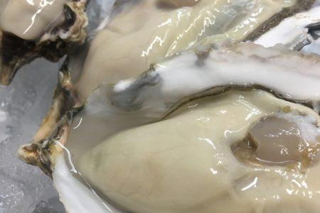 兵庫県坂越の牡蠣