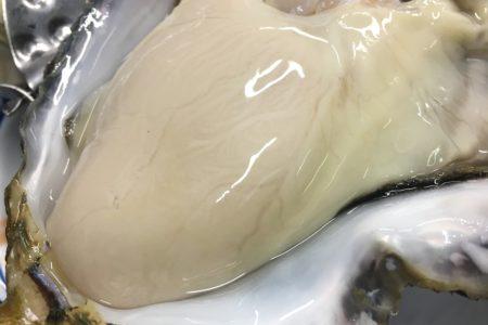 岩手県広田湾の牡蠣