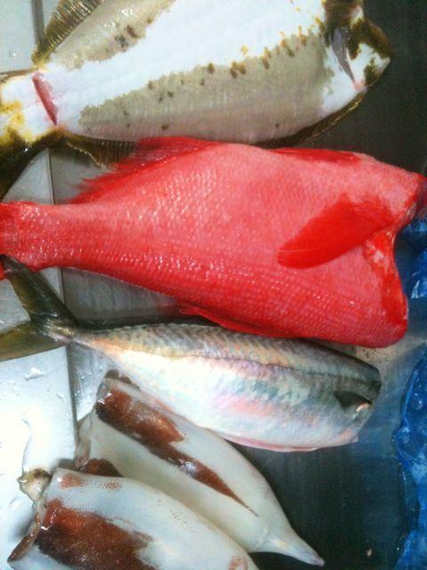 金目鯛 ヒラメ 鯖 スルメ